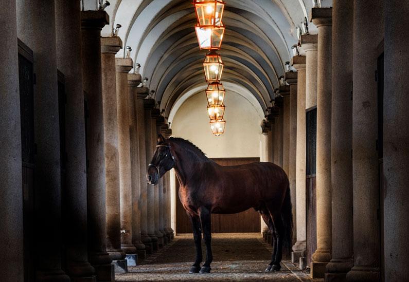 Viaje a la cuna del caballo lusitano